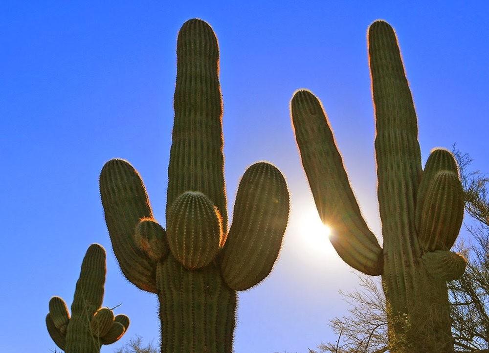 沙漠植物园其它部分_图1-19