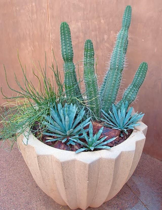沙漠植物园其它部分_图1-21