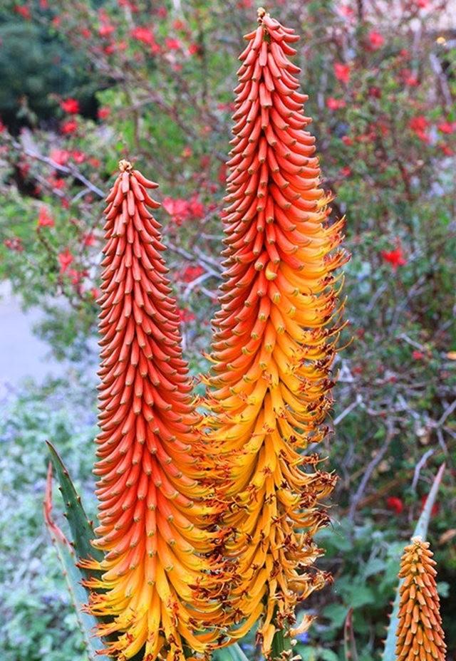 沙漠植物园其它部分_图1-26