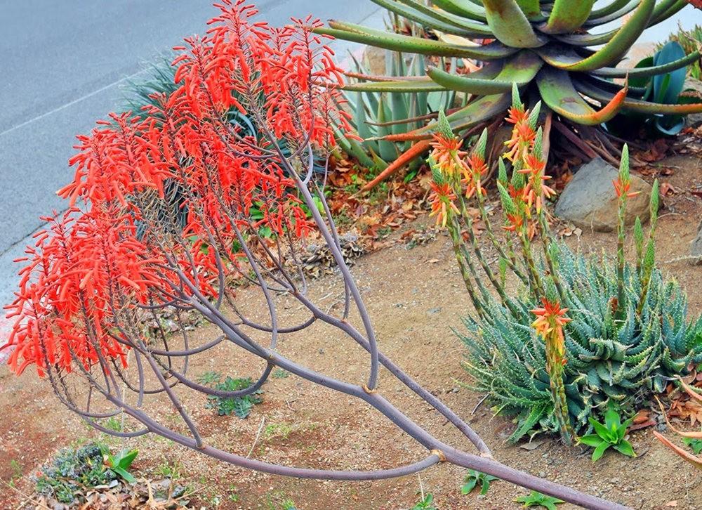 沙漠植物园其它部分_图1-27