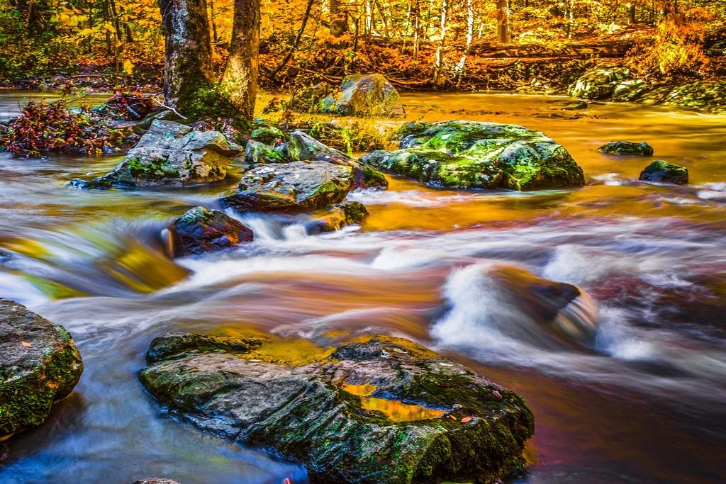 宾州雷德利克里克公园(Ridley creek park),踏秋归来_图1-26