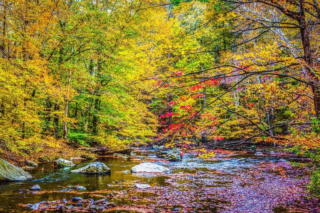 宾州雷德利克里克公园(Ridley creek park),踏秋归来_图1-22
