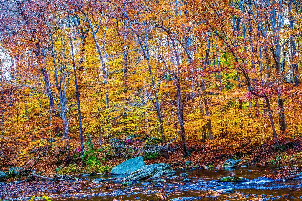 宾州雷德利克里克公园(Ridley creek park),踏秋归来_图1-25
