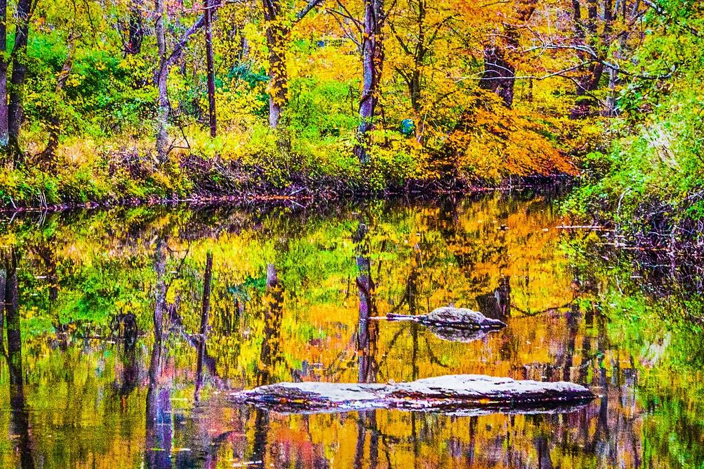 宾州雷德利克里克公园(Ridley creek park),踏秋归来_图1-21