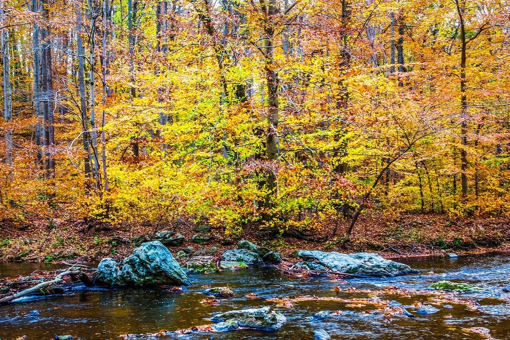宾州雷德利克里克公园(Ridley creek park),踏秋归来_图1-17