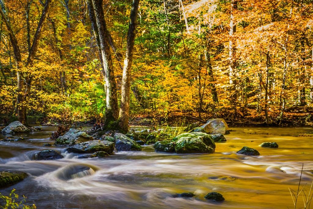 宾州雷德利克里克公园(Ridley creek park),踏秋归来_图1-15