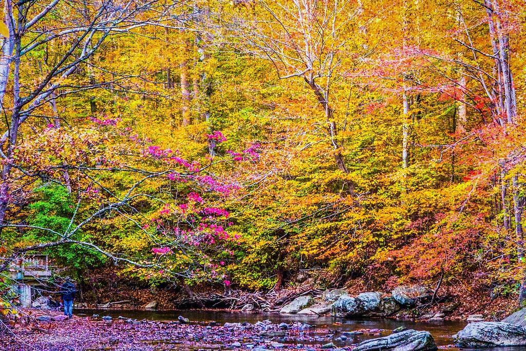 宾州雷德利克里克公园(Ridley creek park),踏秋归来_图1-4