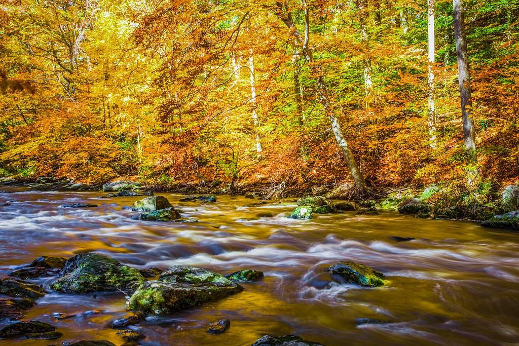 宾州雷德利克里克公园(Ridley creek park),踏秋归来_图1-29