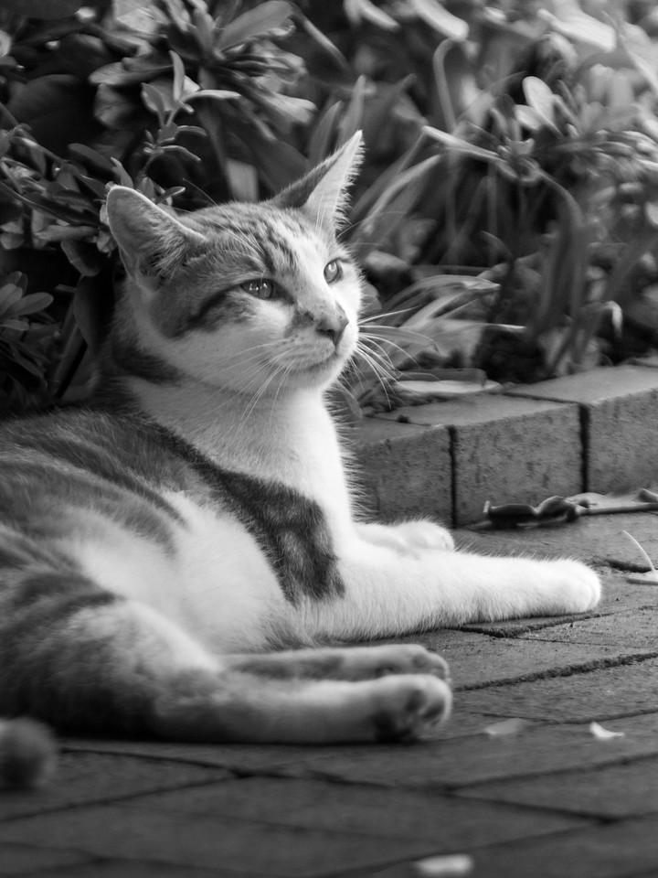 小花猫,别动拍照_图1-3