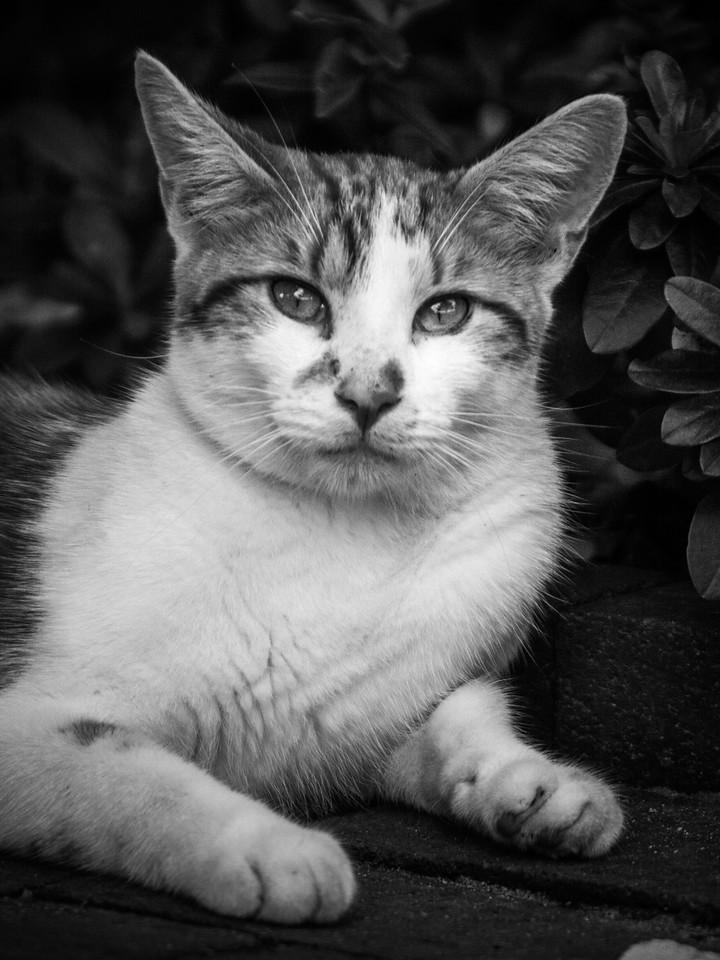 小花猫,别动拍照_图1-5