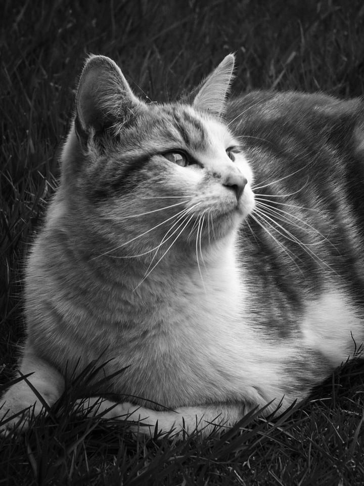 小花猫,别动拍照_图1-7