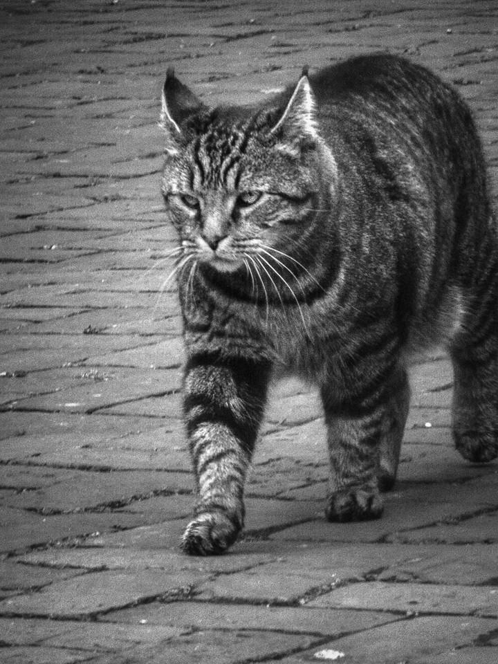 小花猫,别动拍照_图1-10