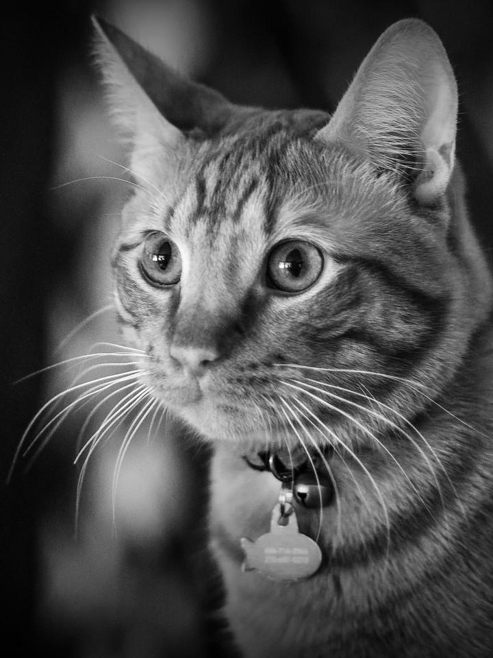 小花猫,别动拍照_图1-1