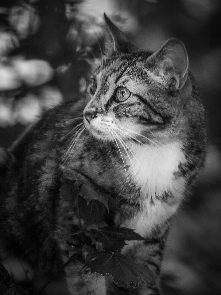 小花猫,别动拍照_图1-9