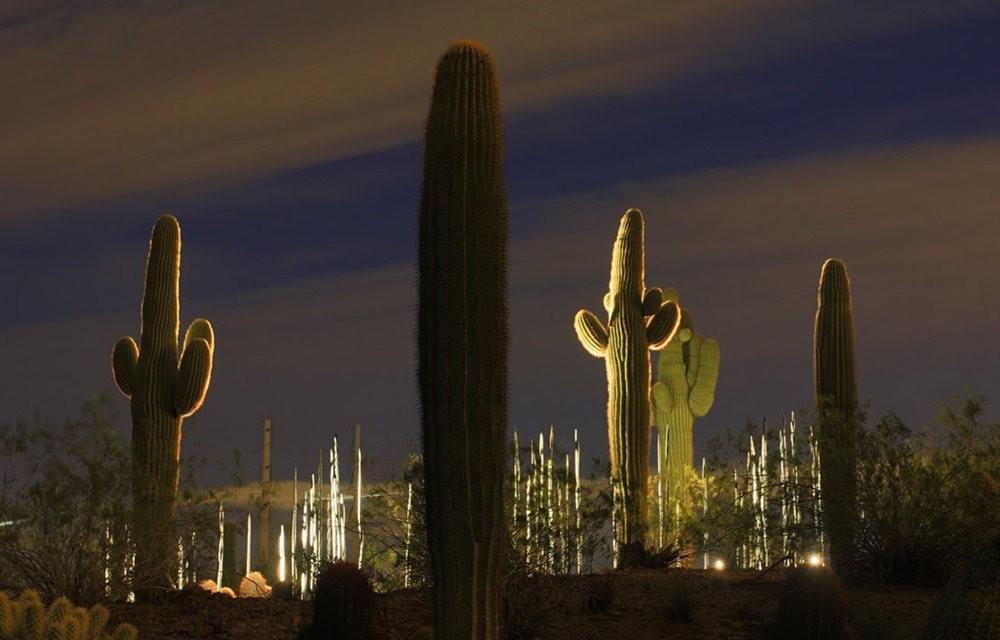 科桑蒂沙漠植物园_图1-1