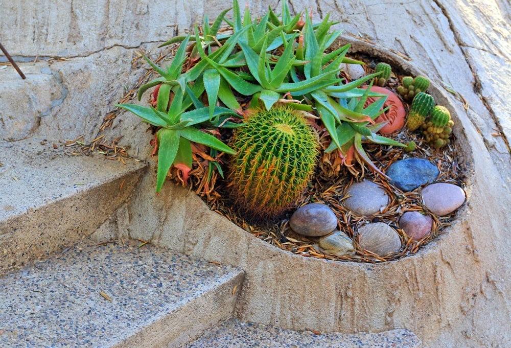 科桑蒂沙漠植物园_图1-7