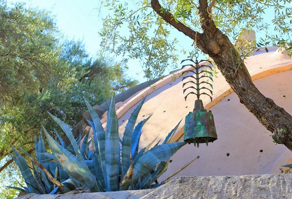 科桑蒂沙漠植物园_图1-9