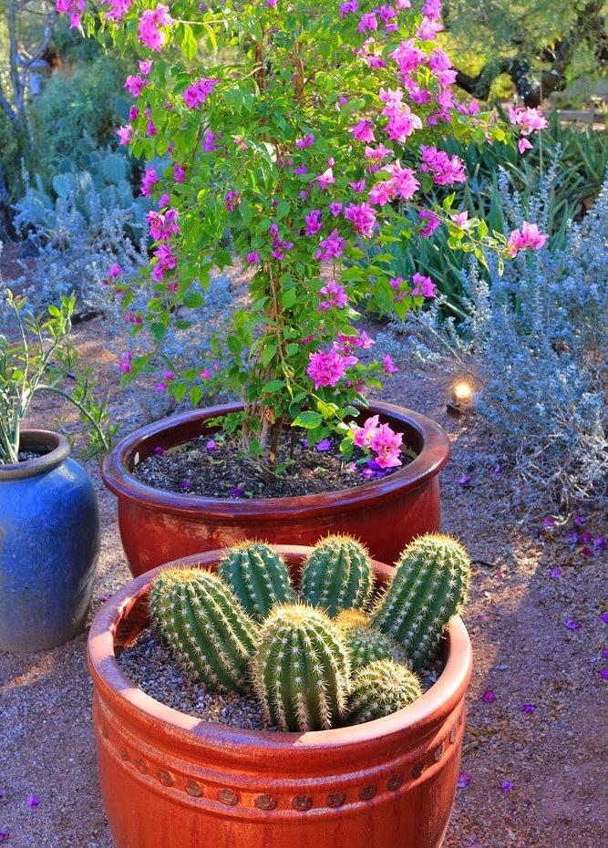 科桑蒂沙漠植物园_图1-11