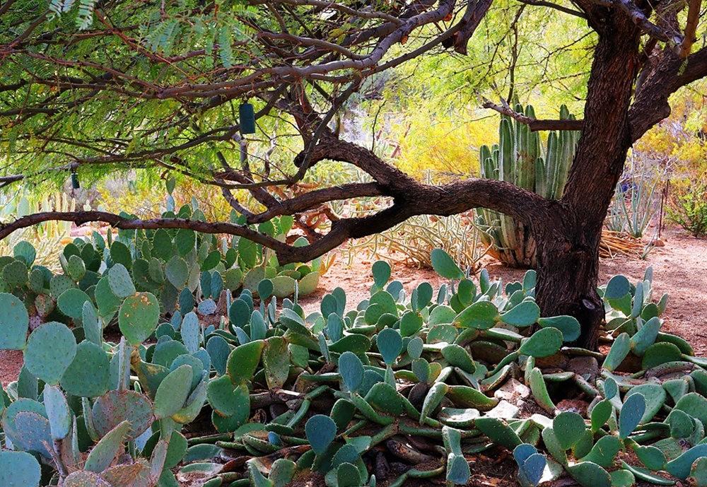 科桑蒂沙漠植物园_图1-14