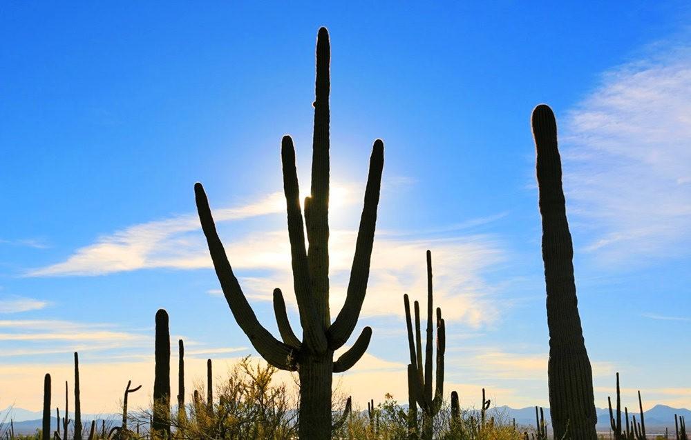 科桑蒂沙漠植物园_图1-17