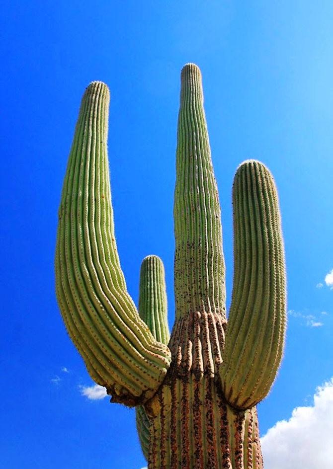 科桑蒂沙漠植物园_图1-18