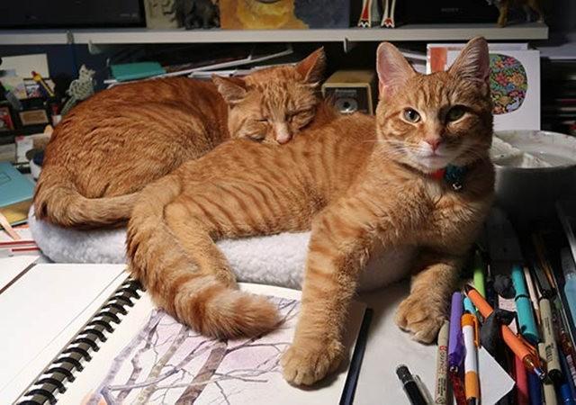 猫可爱_图1-1