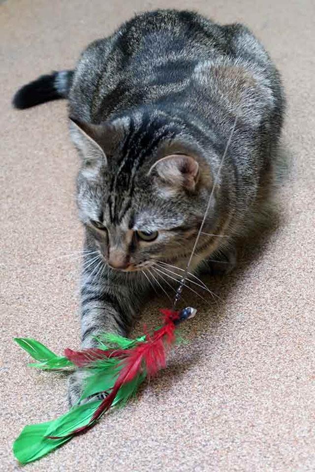 猫可爱_图1-13