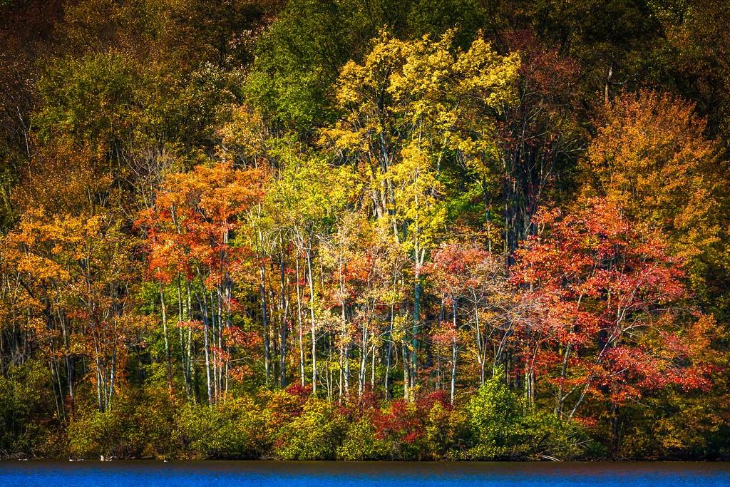 宾州 French Creek State Park,晚秋即景_图1-17