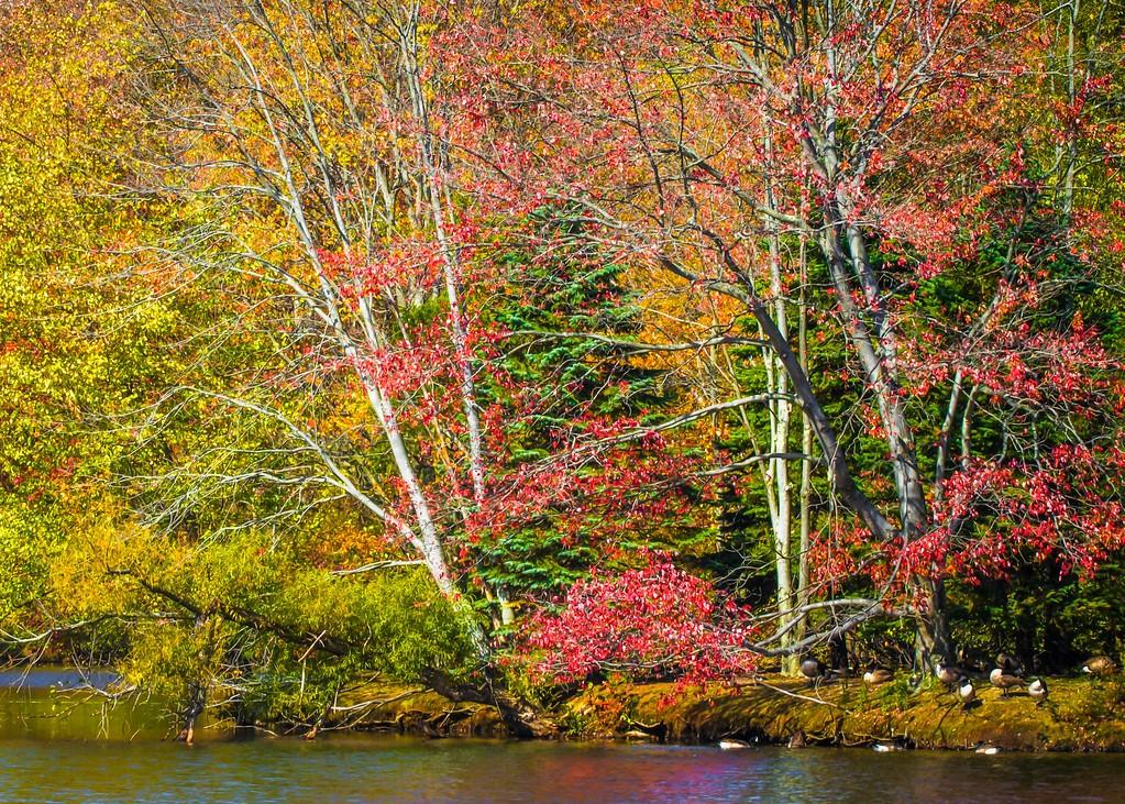 宾州 French Creek State Park,晚秋即景_图1-15