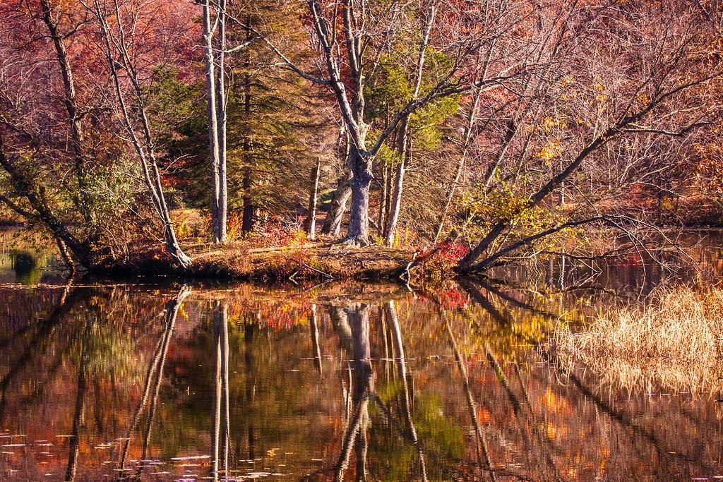 宾州 French Creek State Park,晚秋即景_图1-7