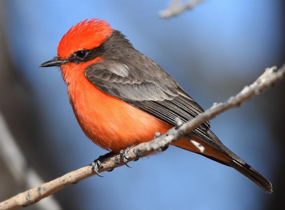 奥罗谷国家公园观鸟_图1-5