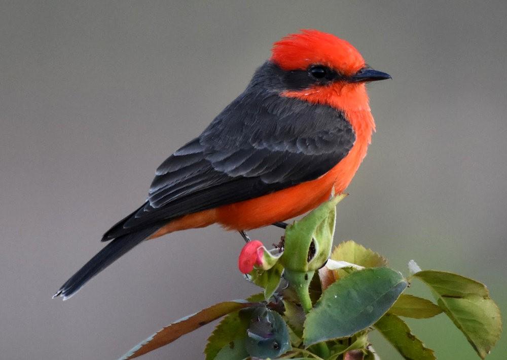 奥罗谷国家公园观鸟_图1-6