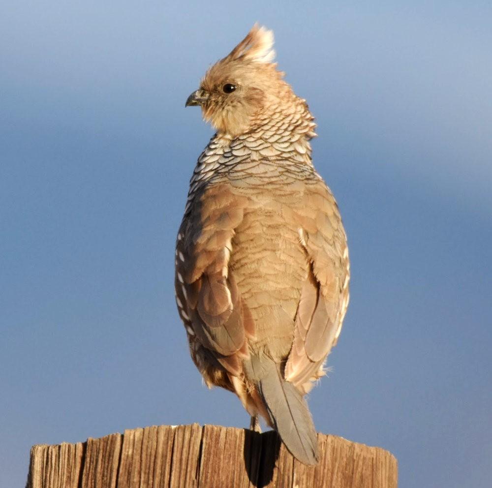 奥罗谷国家公园观鸟_图1-7