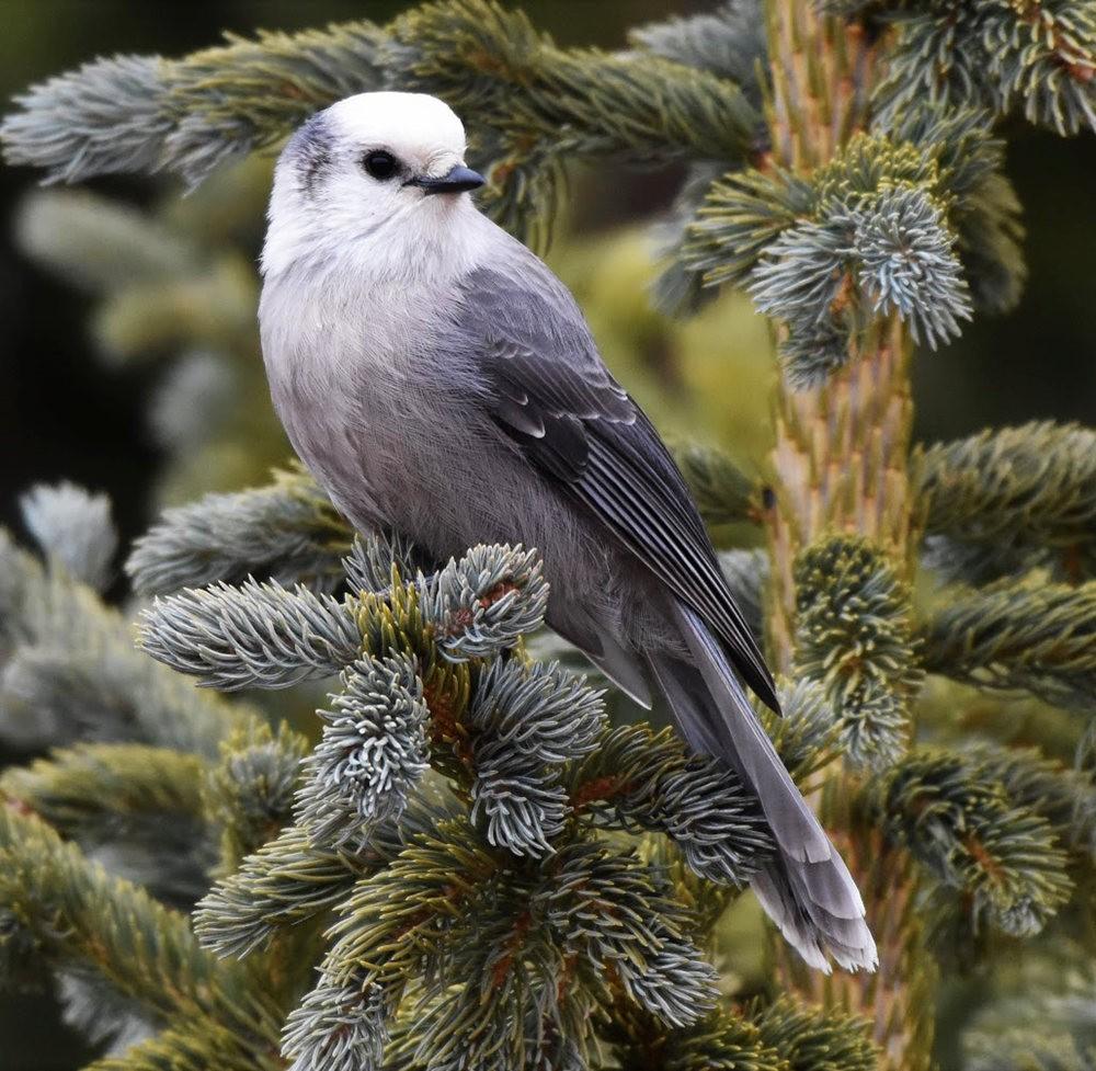 奥罗谷国家公园观鸟_图1-8