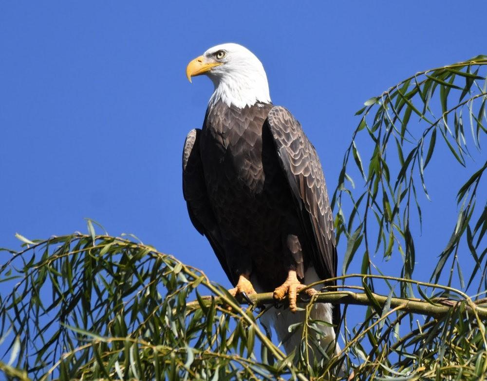 奥罗谷国家公园观鸟_图1-10