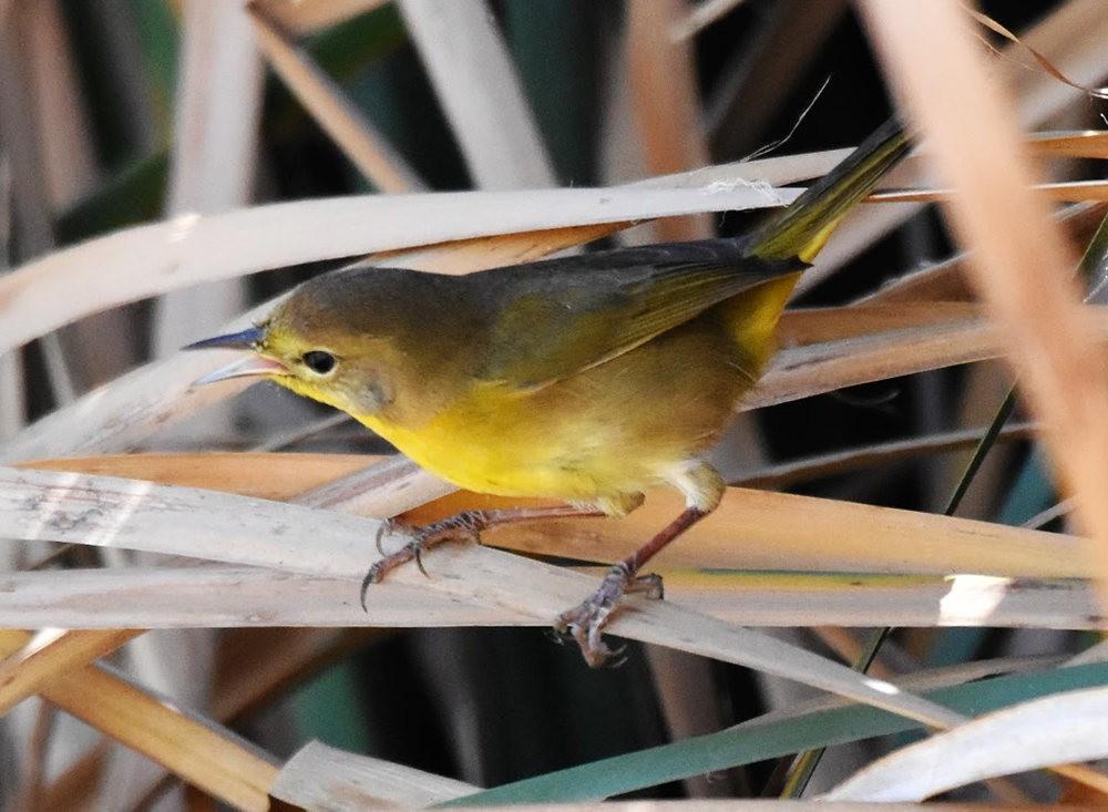 奥罗谷国家公园观鸟_图1-11