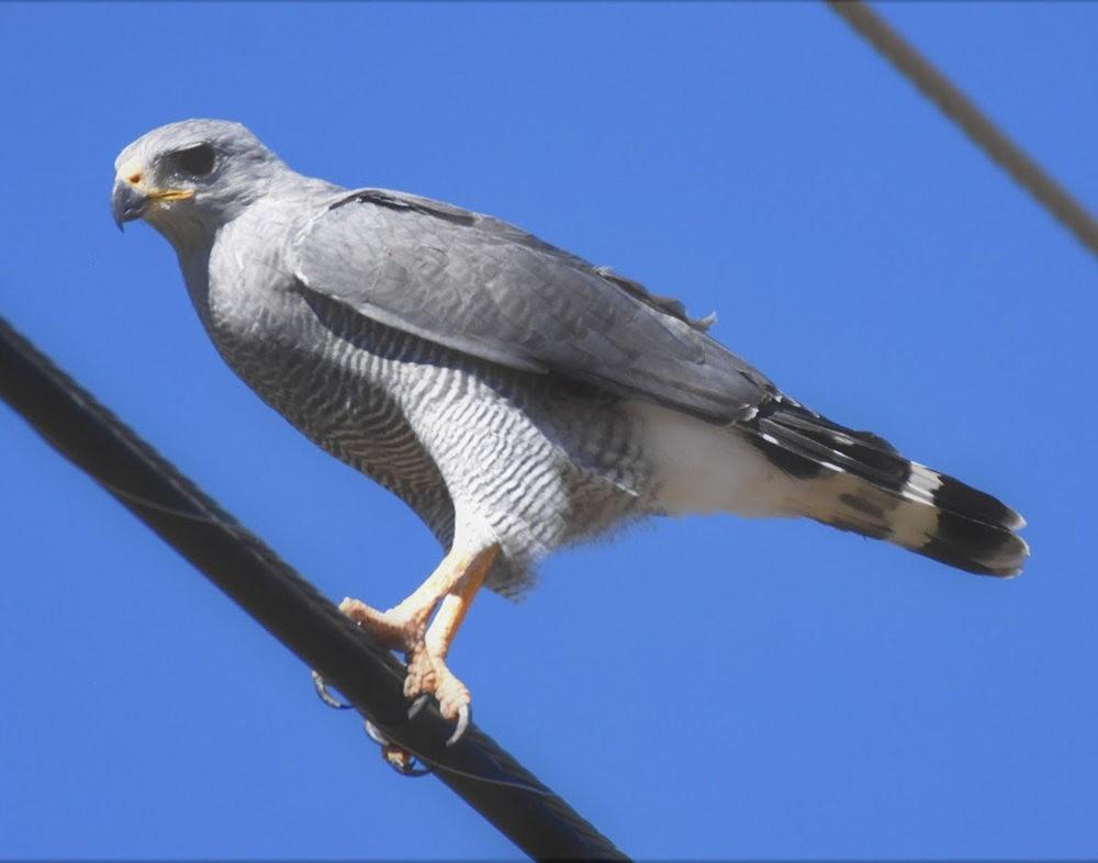 奥罗谷国家公园观鸟_图1-12