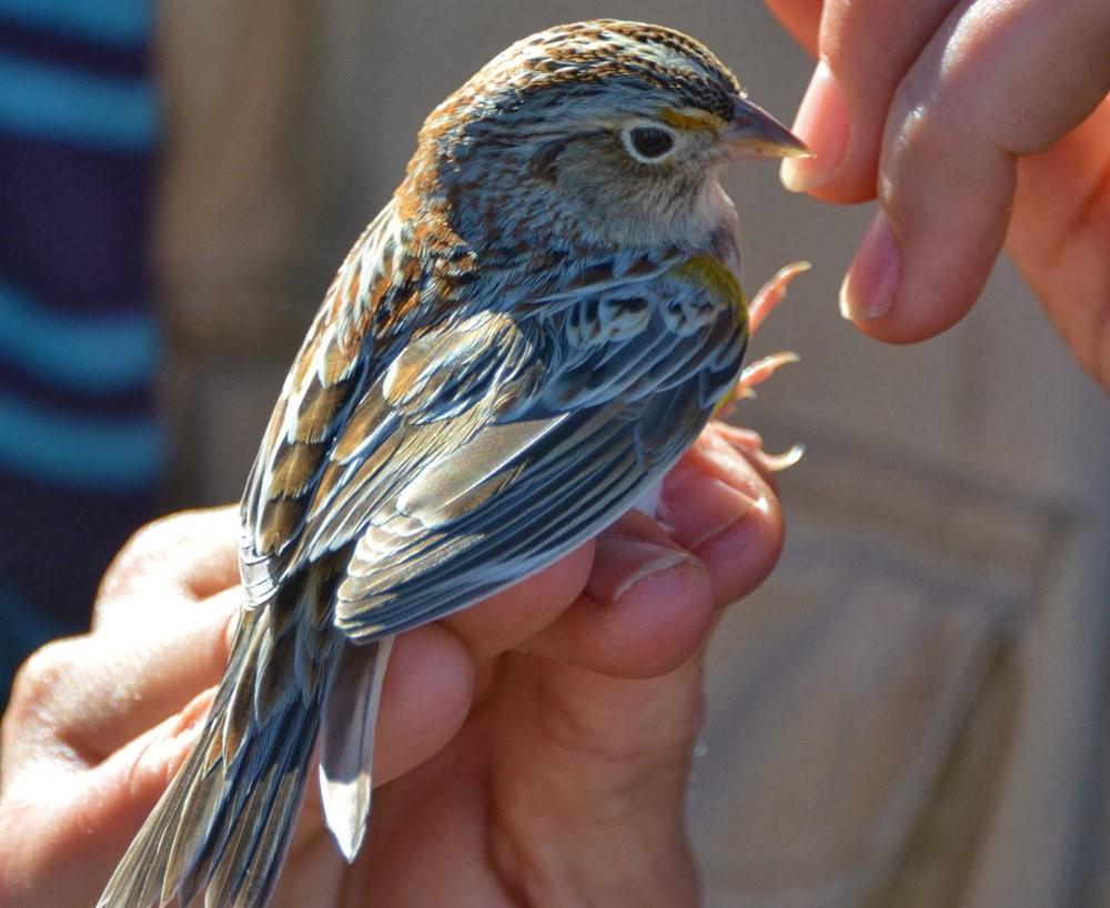 奥罗谷国家公园观鸟_图1-13