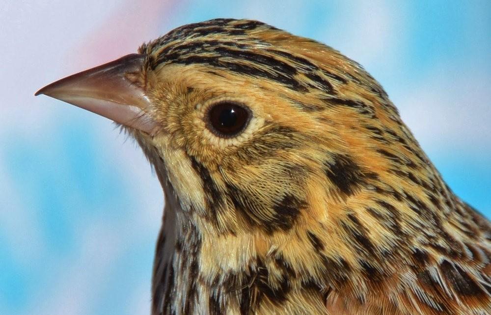 奥罗谷国家公园观鸟_图1-14
