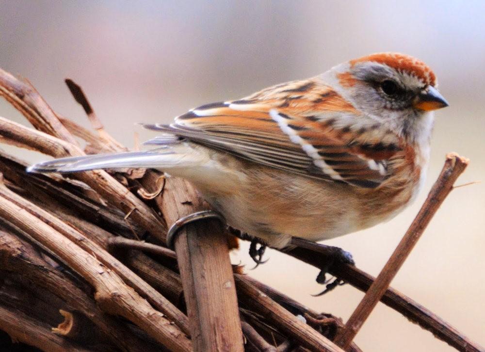 奥罗谷国家公园观鸟_图1-16