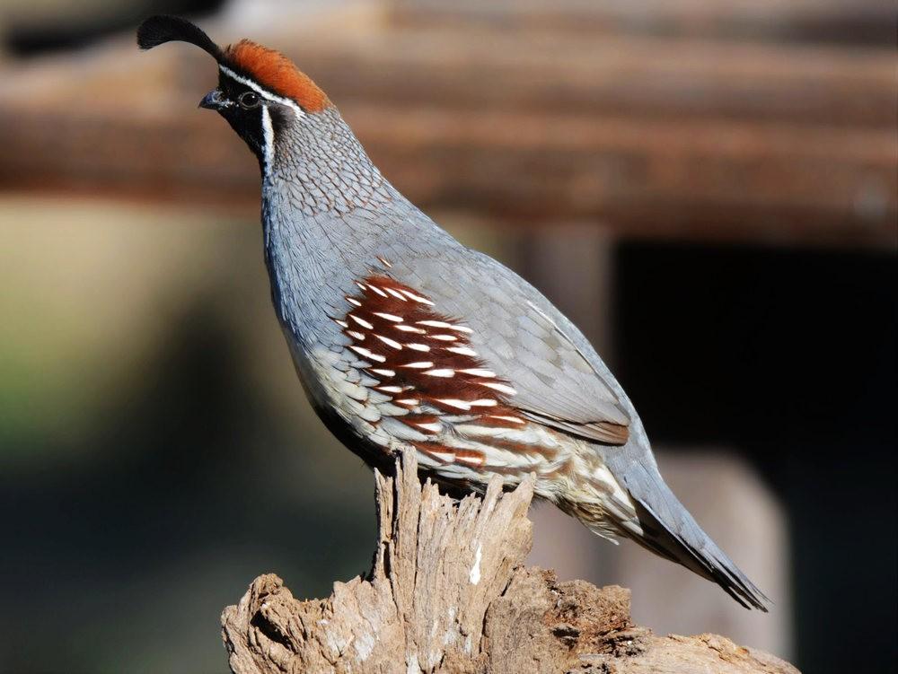 奥罗谷国家公园观鸟_图1-17