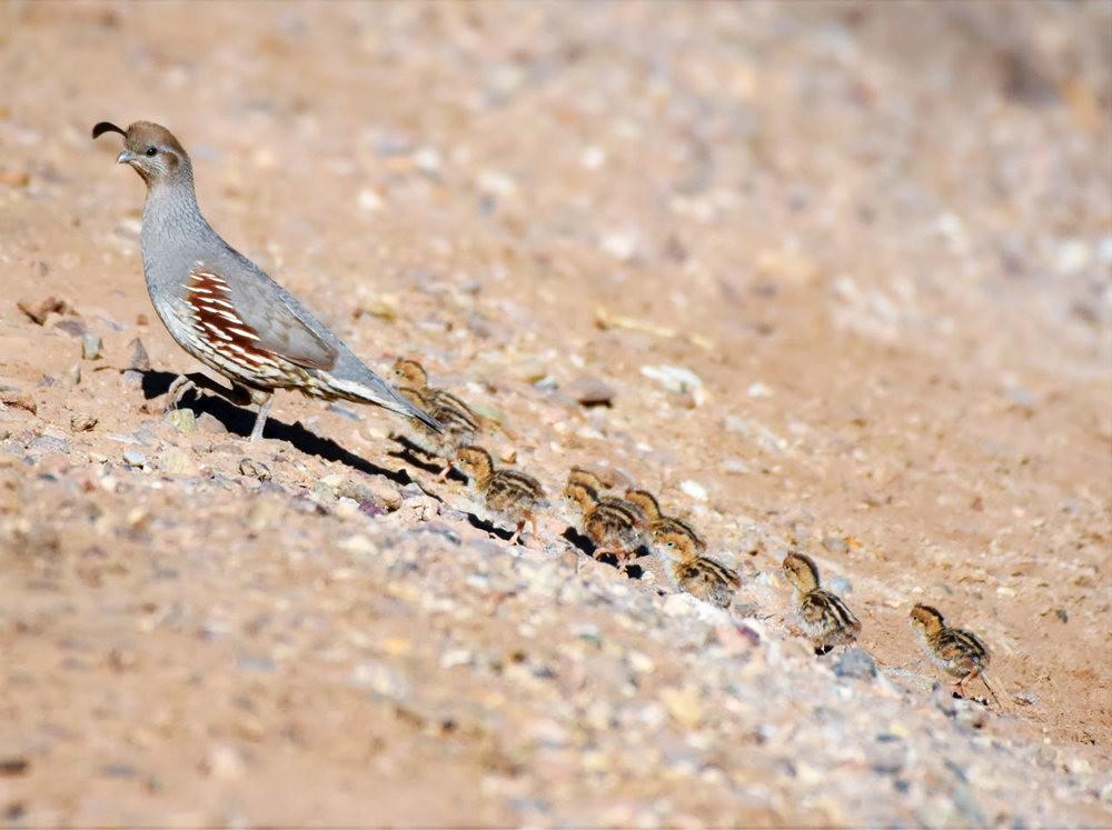 奥罗谷国家公园观鸟_图1-18