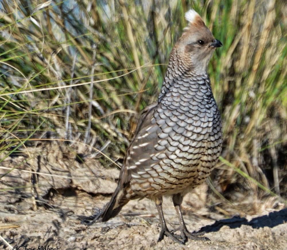 奥罗谷国家公园观鸟_图1-19
