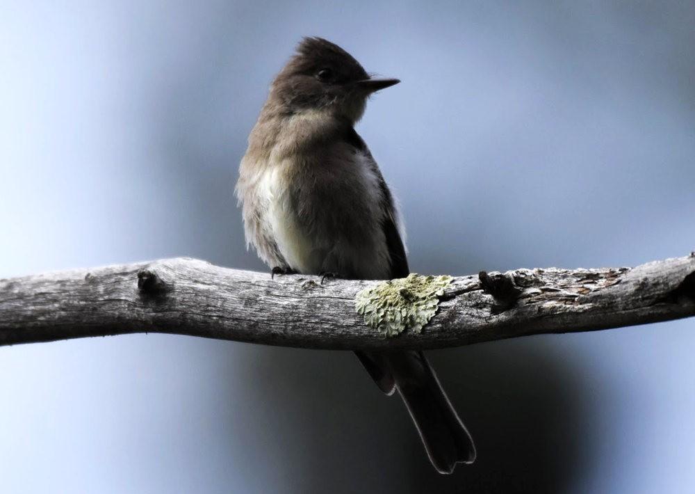 奥罗谷国家公园观鸟_图1-21