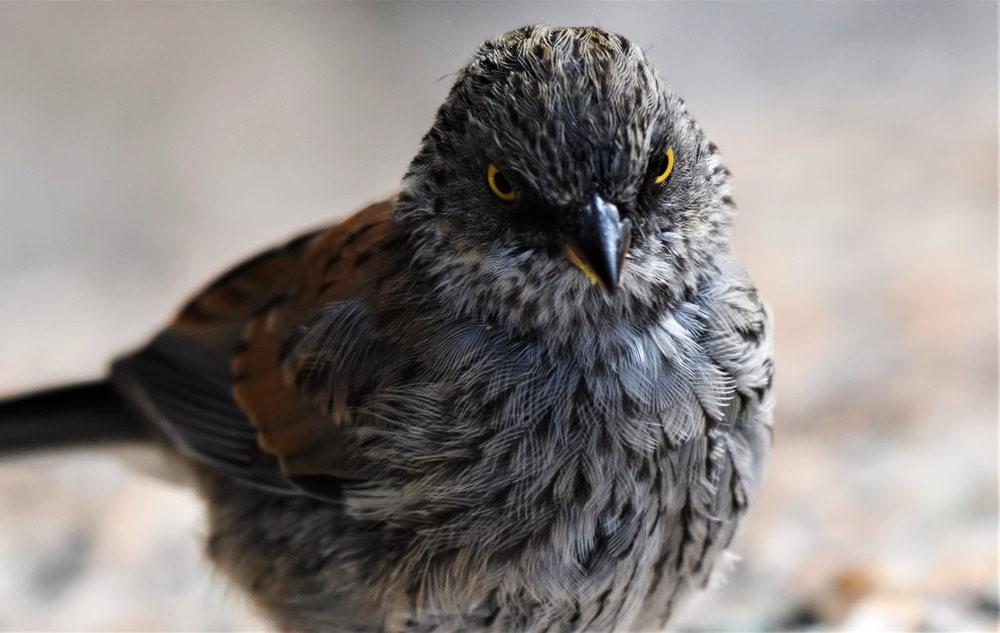 奥罗谷国家公园观鸟_图1-22
