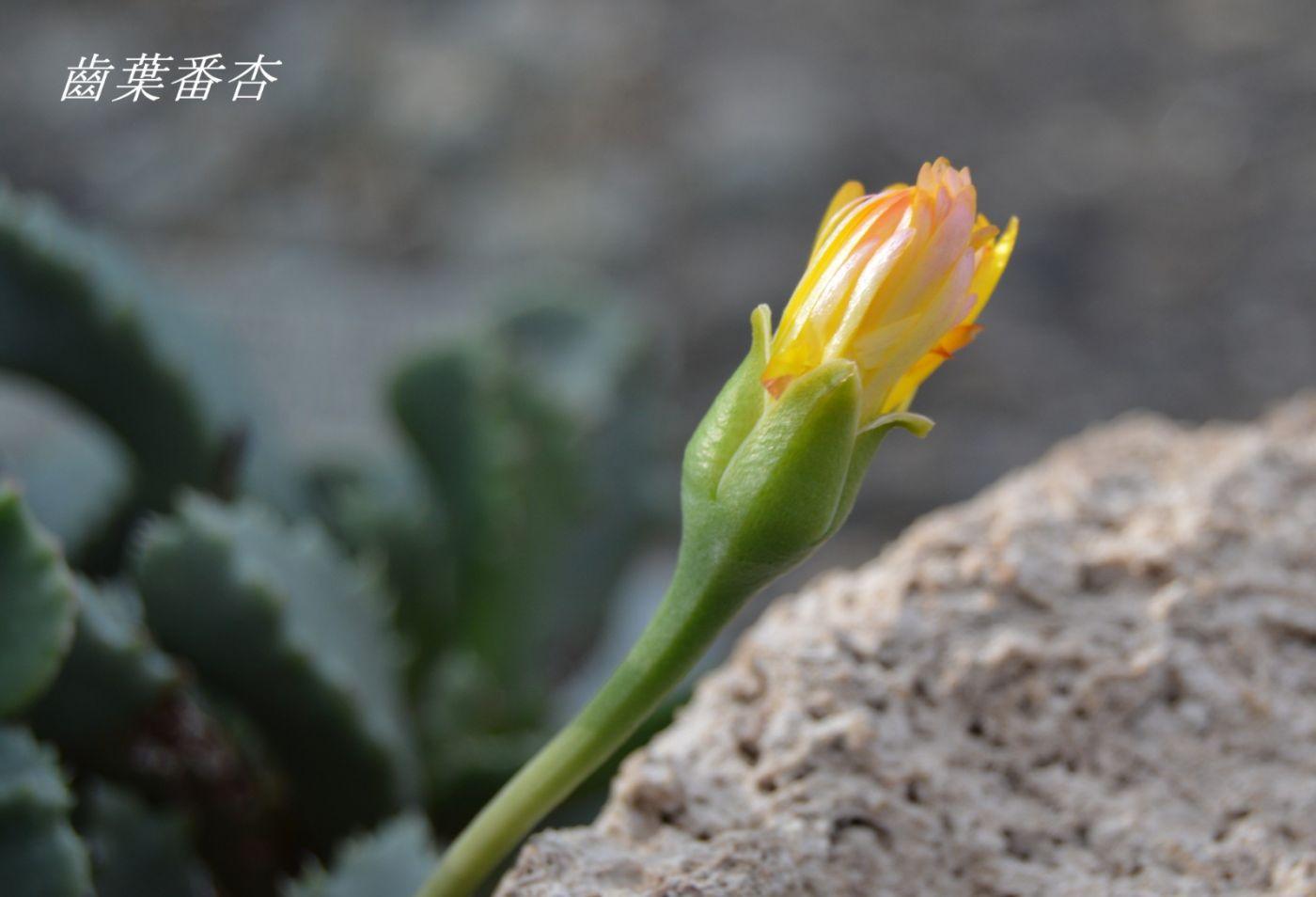 花草图谱 (17)_图1-9