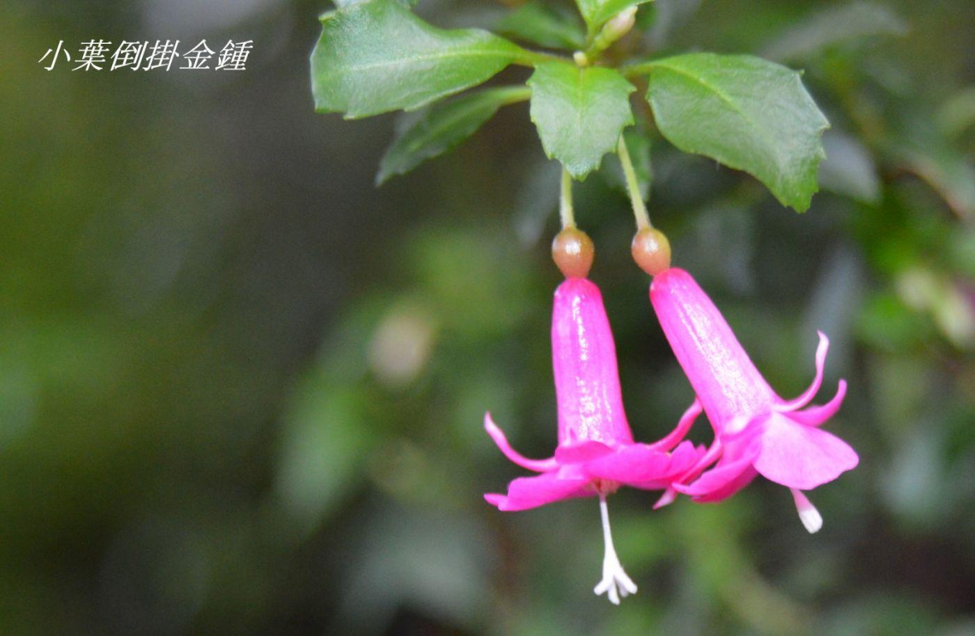 花草图谱 (17)_图1-10