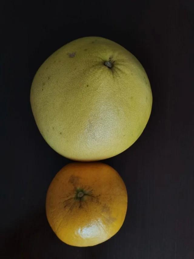 又到吃柚季节,家人购回柚子,大小远不同,一大两小,置放一起,如硕大父祖携俩童稚儿 ..._图1-1