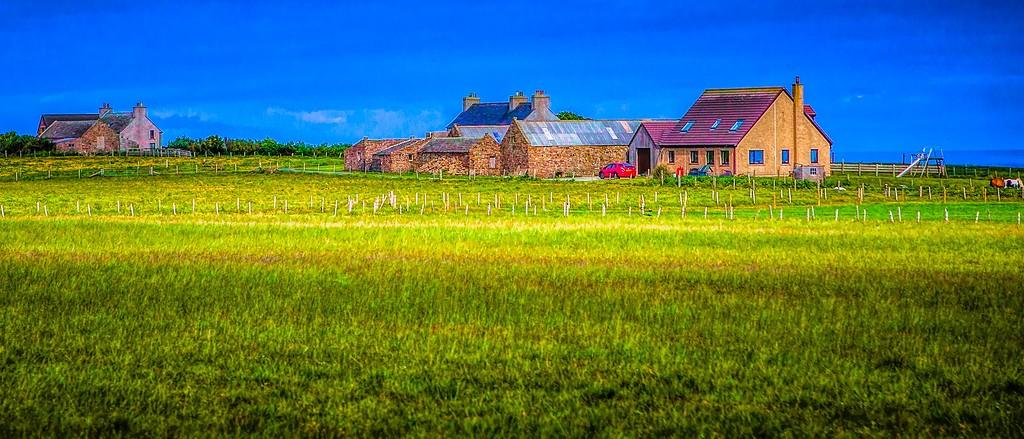 苏格兰奥克尼岛(Orkney Islands),牧场牛羊_图1-10