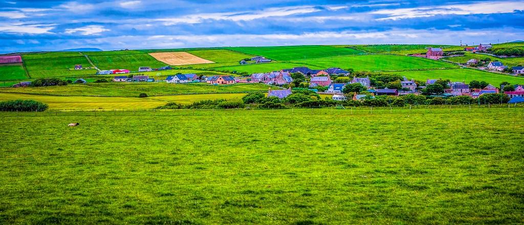 苏格兰奥克尼岛(Orkney Islands),牧场牛羊_图1-11